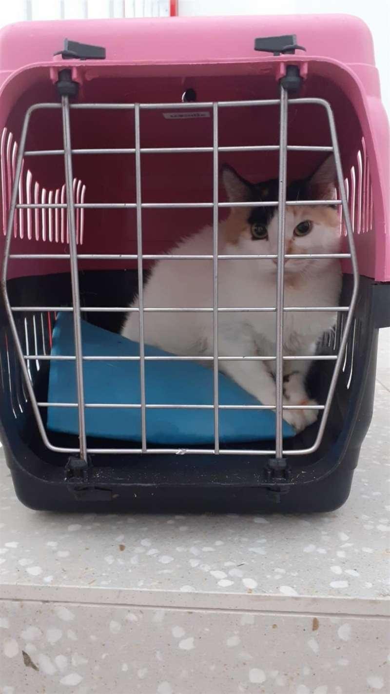 Una imagen de la gata que llegó en patera, facilitada por Cruz Roja.