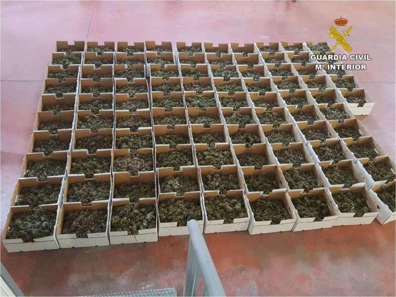 Plantas de marihuana intervenidas, en una imagen de la Guardia Civil.