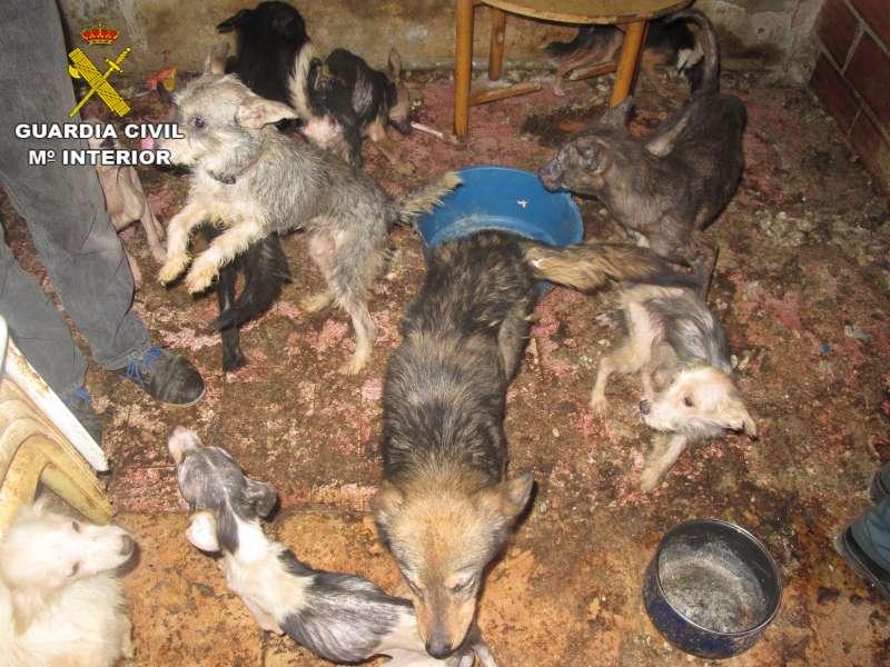 Los perros encontrados en Benaguasil en condiciones insualubres. //EPDA