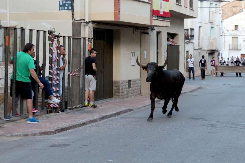 Toros en Soneja en septiembre