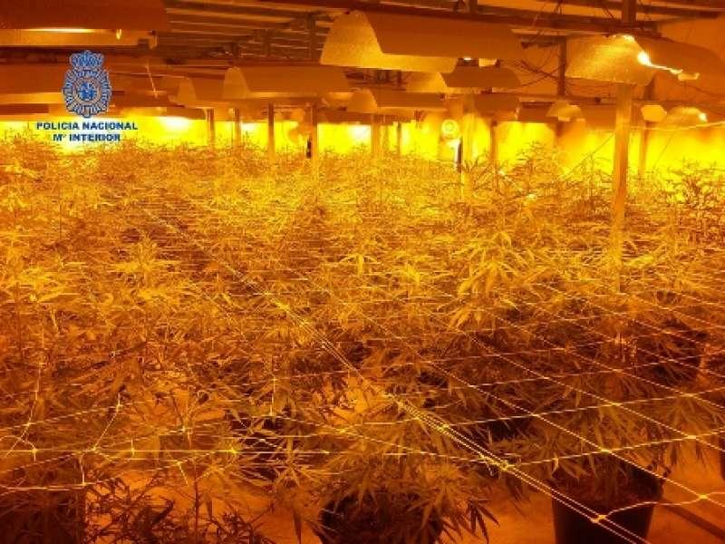 Plantación de marihuana en una fábrica de Moncada. EPDA
