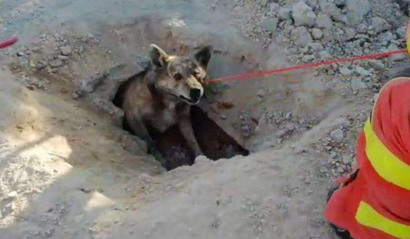 Una imagen del rescate del perro facilitada por el Ayuntamiento de Cullera. EFE