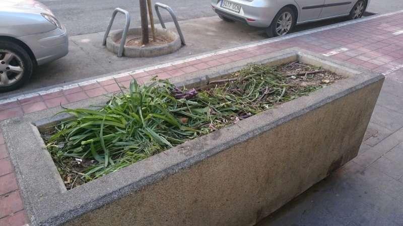 Jardinera en calle Cuba. FOTO EPDA
