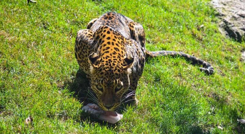 Helados para los animales en Bioparc