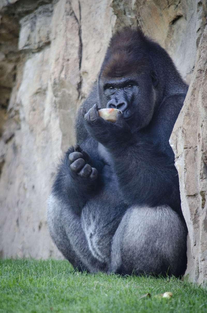 Mono con los helados./PDA