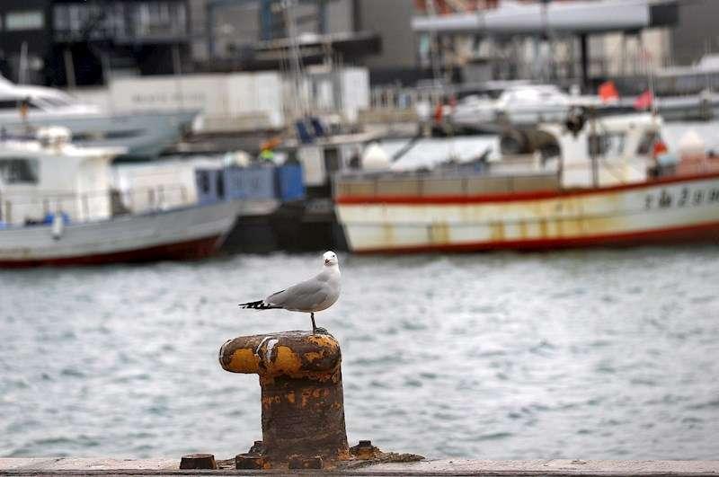 Varias barcas de la flota de Valencia amarrada este viernes en el puerto de Valencia. EFE