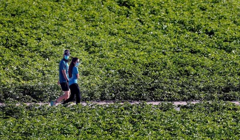 Una pareja con sendas mascarillas de protección pasea por la huerta en Burjassot. EFE