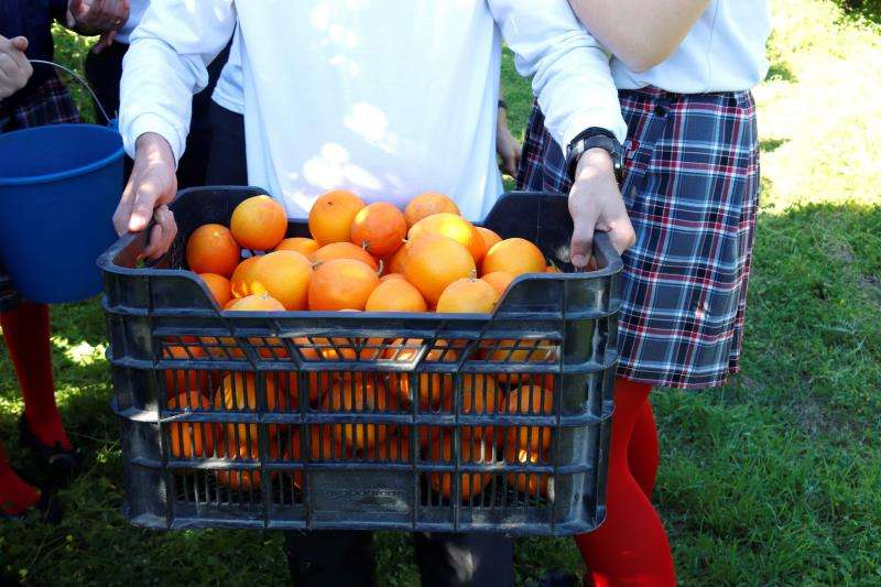 Una persona transporta una caja de naranjas. EFE