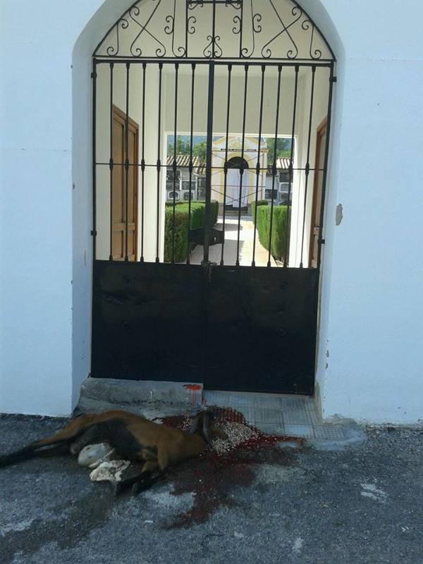 Imagen de la cabra degollada en la puerta del cementerio de Estivella. EPDA