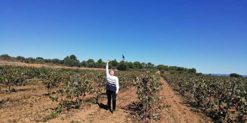 Isabel Navarro finaliza la vendimia. EPDA