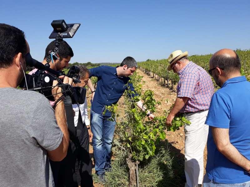 Inspección de las plantaciones dañadas en Requena. GVA