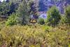 El peri�dico de aqu� -Las brigadas forestales en acci�n