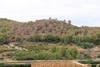 El peri�dico de aqu� -Imagen de los pinos da�ados en el t�rmino municipal de Alg�mia d