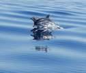 El peri�dico de aqu� -Imagen de dos delfines. FOTO: DIVAL