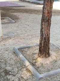 El peri�dico de aqu� -Procesionaria en un parque de Manises. EPDA