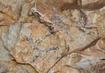 El peri�dico de aqu� -Arte Rupestre Levantino. FOTO: GVA