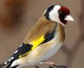 El peri�dico de aqu� -Imagen de una de las aves. FOTO: EPDA