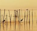 El peri�dico de aqu� -Aves en la Albufera. FOTO: GVA